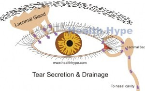 Tear secretion and drainage from the eye