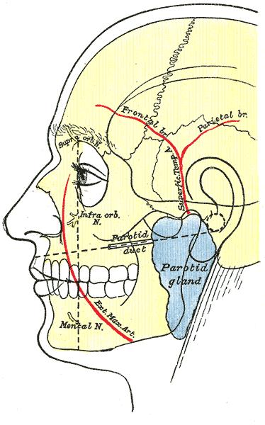 Temporal Arteritis Giant Cell Arteritis Causes Symptoms